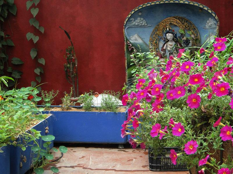 Goa Gourmet Vegetariano apresenta horta orgânica e sustentável