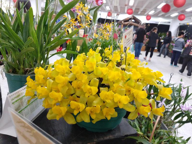 Primavera chegando: São Paulo recebe a maior exposição de Orquídeas do Estado