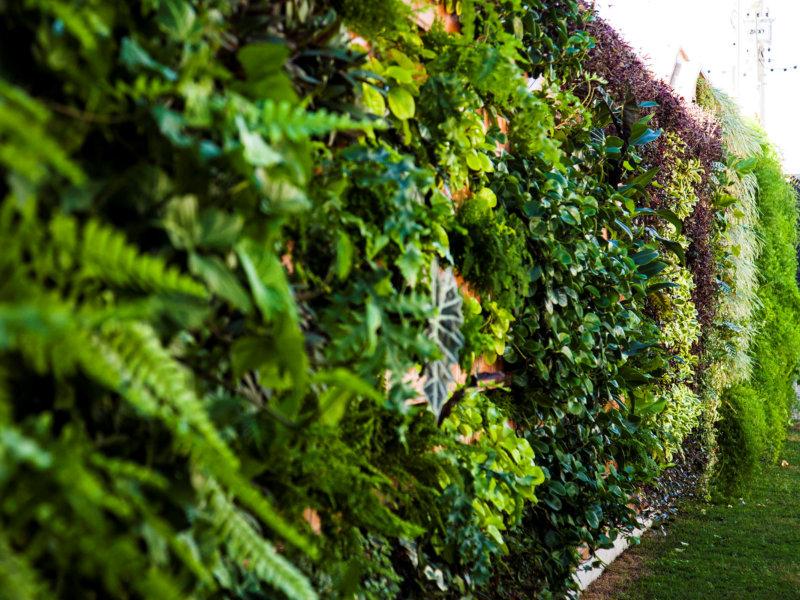Garden Wall fala sobre irrigação para jardins verticais